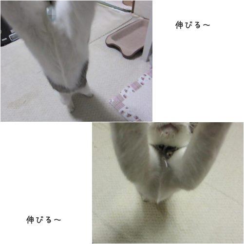 cats_20131119202007683.jpg