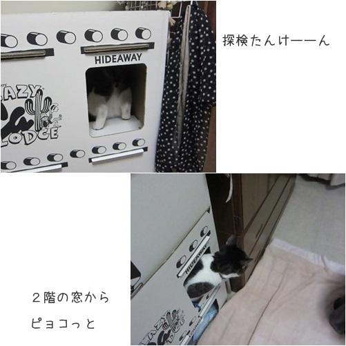 cats_2013112513221124e.jpg