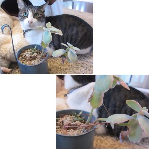 cats_2013112614072614c.jpg