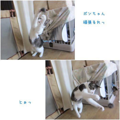 cats_20140924195849e93.jpg