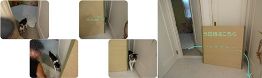 cats_2014092719482823c.jpg