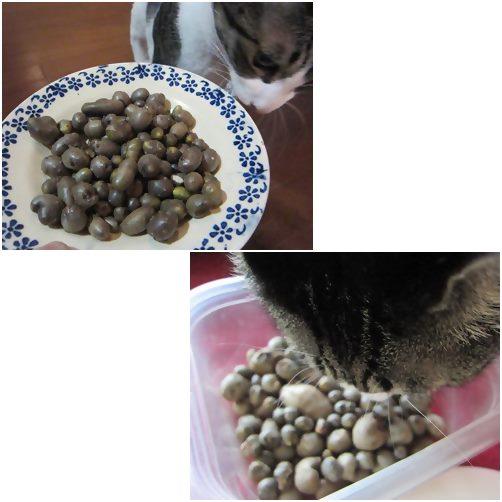 cats_20141006210318200.jpg