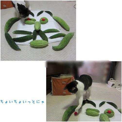 cats_201410082038340a4.jpg