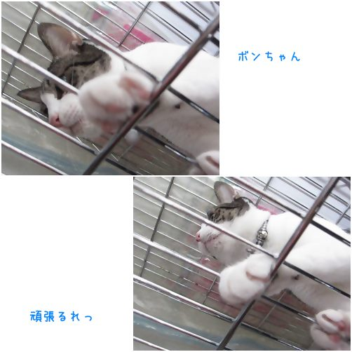 cats_20141021203146dcc.jpg