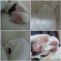 cats_20141021234216120.jpg