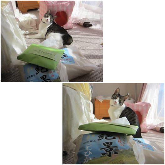 cats_201410222046510e0.jpg