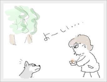 donguri1.jpg