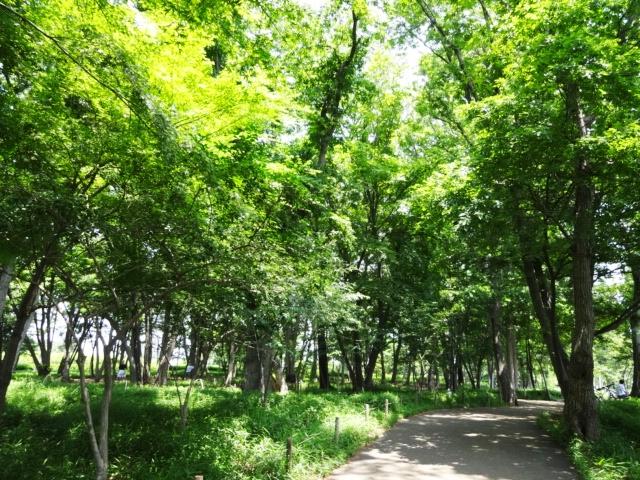 中央公園01_20130526