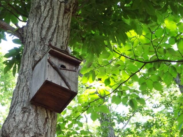 鳥の巣箱_20130526