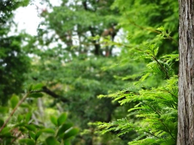 緑_20130529