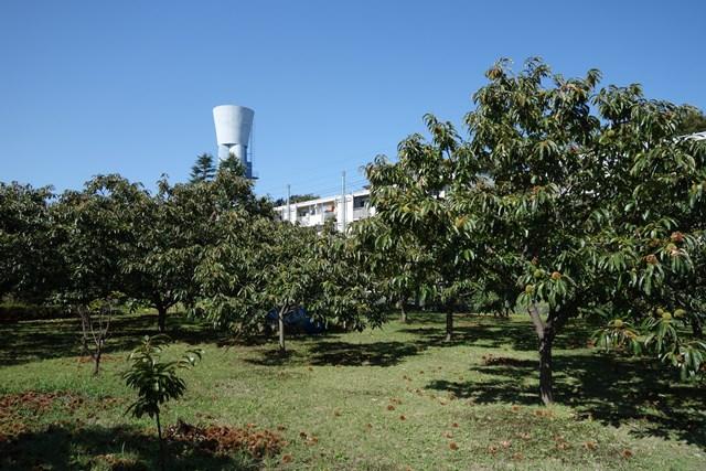都公社祖師谷住宅の栗林と住棟と給水塔