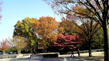 昭和記念公園2013秋 04