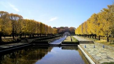 昭和記念公園2013秋 08