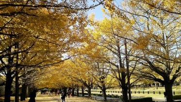 昭和記念公園2013秋 10