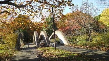 昭和記念公園2013秋 13