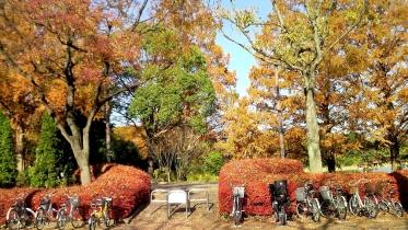 昭和記念公園2013秋 16