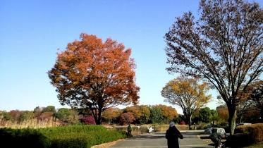 昭和記念公園2013秋 17