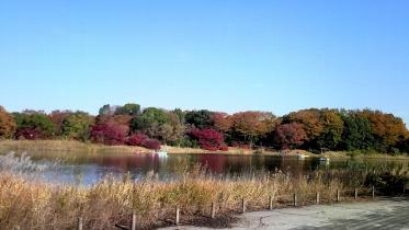 昭和記念公園2013秋 18