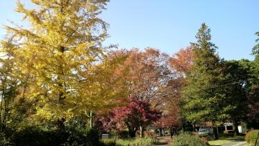 昭和記念公園2013秋 19