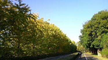 昭和記念公園2013秋 21