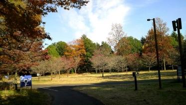 昭和記念公園2013秋 22