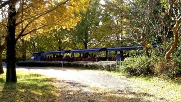 昭和記念公園2013秋 23