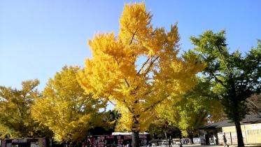 昭和記念公園2013秋 25