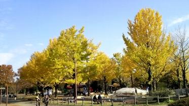 昭和記念公園2013秋 27