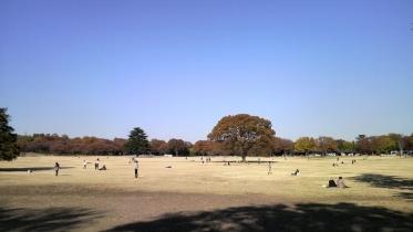 昭和記念公園2013秋 28