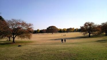 昭和記念公園2013秋 29
