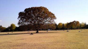 昭和記念公園2013秋 30