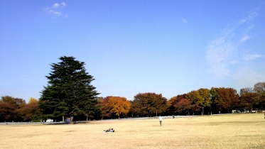 昭和記念公園2013秋 31