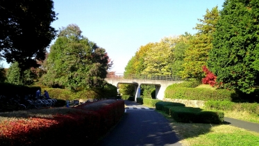 昭和記念公園2013秋 32