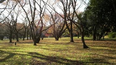 昭和記念公園2013秋 34