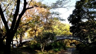 昭和記念公園2013秋 36