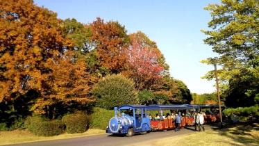 昭和記念公園2013秋 37