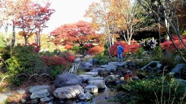 昭和記念公園2013秋 40