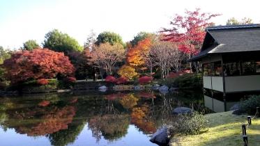 昭和記念公園2013秋 41