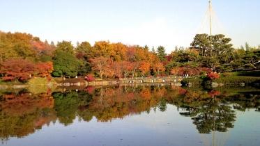 昭和記念公園2013秋 42