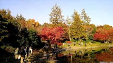 昭和記念公園2013秋 43