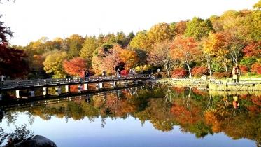 昭和記念公園2013秋 44