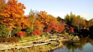 昭和記念公園2013秋 45