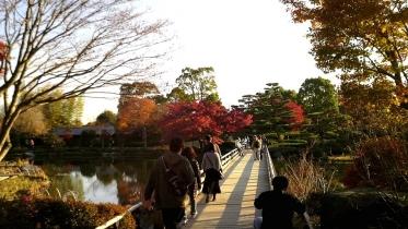 昭和記念公園2013秋 46