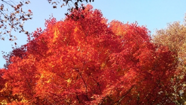 昭和記念公園2013秋 47