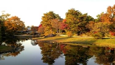 昭和記念公園2013秋 50