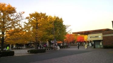 昭和記念公園2013秋 51