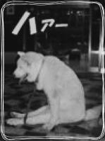 犬 ため息 image