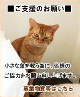 top-goeienbana.jpg
