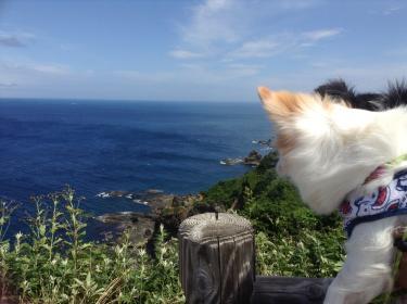 上から島武意海岸
