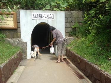 秘密のトンネルみたいな